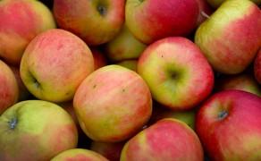 Fruit van het seizoen